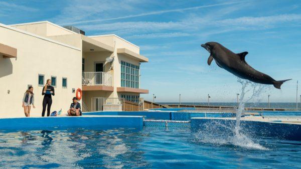 ดูหนัง Bernie The Dolphin1 ดูหนังออนไลน์ฟรี ดูหนังฟรี HD ชัด ดูหนังใหม่ชนโรง หนังใหม่ล่าสุด เต็มเรื่อง มาสเตอร์ พากย์ไทย ซาวด์แทร็ก ซับไทย หนังซูม หนังแอคชั่น หนังผจญภัย หนังแอนนิเมชั่น หนัง HD ได้ที่ movie24x.com
