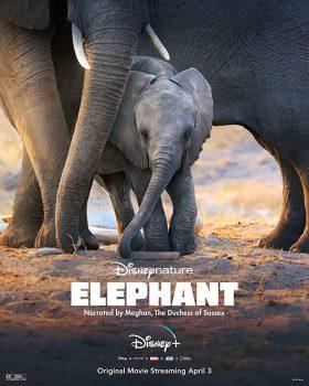 ดูหนัง ELEPHANT (2020) DISNEY+ อัศจรรย์ชีวิตของช้าง ดูหนังออนไลน์ฟรี ดูหนังฟรี HD ชัด ดูหนังใหม่ชนโรง หนังใหม่ล่าสุด เต็มเรื่อง มาสเตอร์ พากย์ไทย ซาวด์แทร็ก ซับไทย หนังซูม หนังแอคชั่น หนังผจญภัย หนังแอนนิเมชั่น หนัง HD ได้ที่ movie24x.com